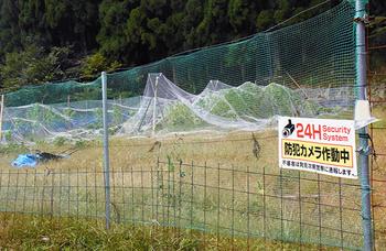 鳥取県智頭町 産業用大麻の栽培 町おこし 上野俊彦 群馬県 大麻に魅せられて.png