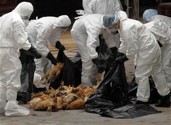 鳥インフルエンザ 人間にもうつる 強毒性 予防が困難 重症化  タミフル 有効.jpg